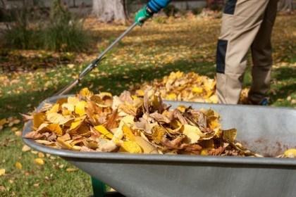 San Luis Obispo Yard Cleanups